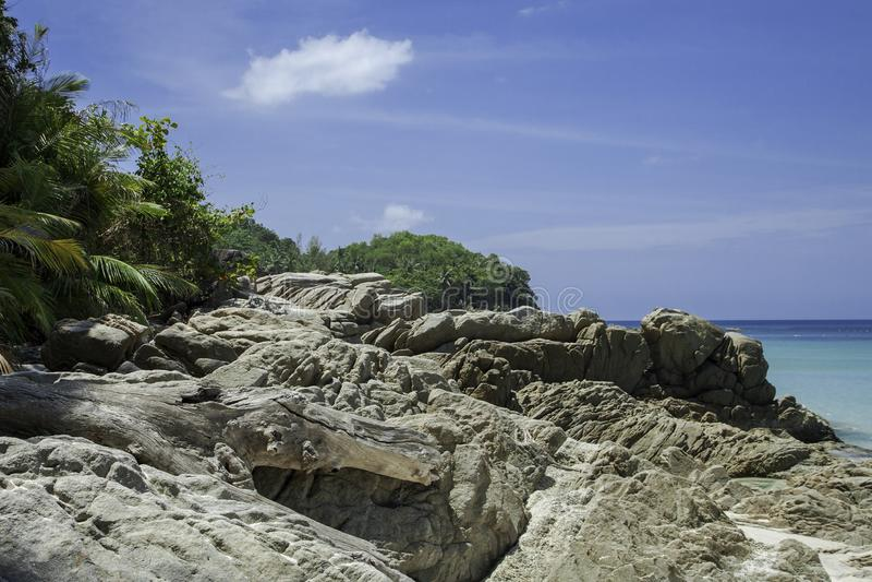 Baia blu del mare Acqua di mare trasparente azzurrata Spiaggia di sabbia bianca e vecchio albero caduto fotografia stock