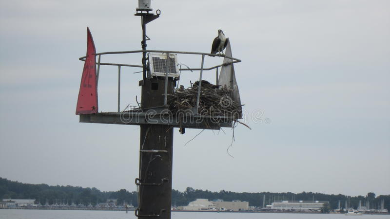 Baia di Chesapeake immagini stock