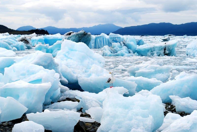Baia di ghiaccio dell'Alaska immagini stock