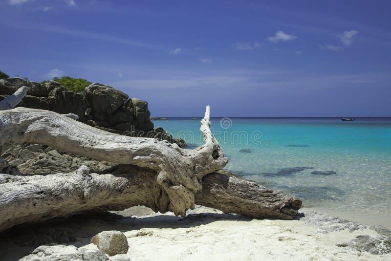 Baie bleue de mer Eau de mer transparente azurée Plage blanche de sable et vieil arbre tombé images libres de droits