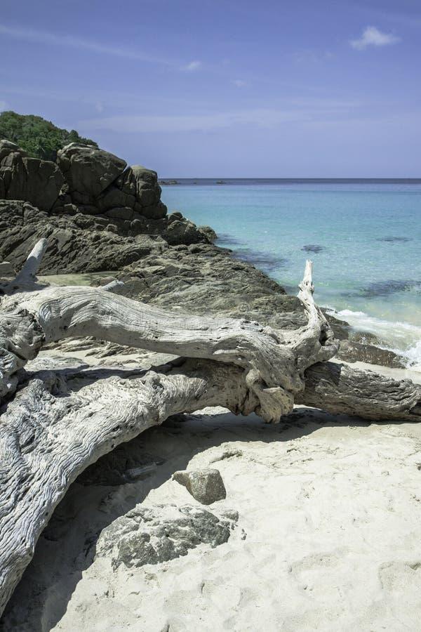 Baie bleue de mer Eau de mer transparente azur?e Plage blanche de sable et vieil arbre tomb? images stock