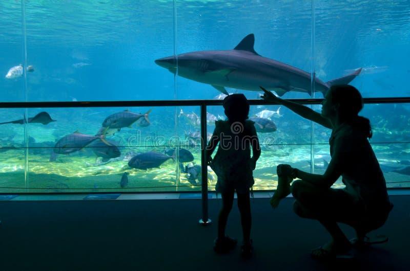 Baie de requin dans l'Australie de la Gold Coast Queensland du monde de mer image stock