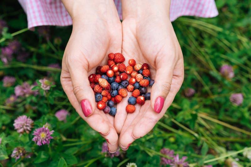 Baies de forêt dans les mains des myrtilles et des fraises image libre de droits