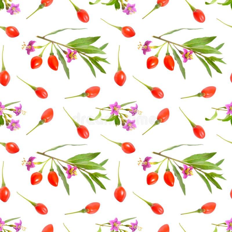 Baies de Goji ou barbarum de Lycium avec des fleurs d'isolement sur le fond blanc Fond sans couture photographie stock libre de droits