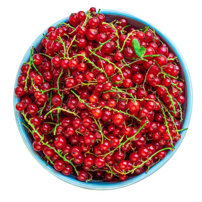 Baies de groseille rouge dans une cuvette avec des feuilles d'isolement sur le fond blanc Tas de groseille fraîche Vue sup?rieure photo libre de droits