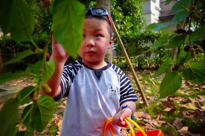 Baies de mûre de récolte de rassemblement de petit garçon photos libres de droits
