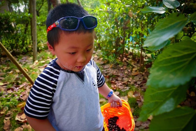 Baies de mûre de récolte de rassemblement de petit garçon image stock