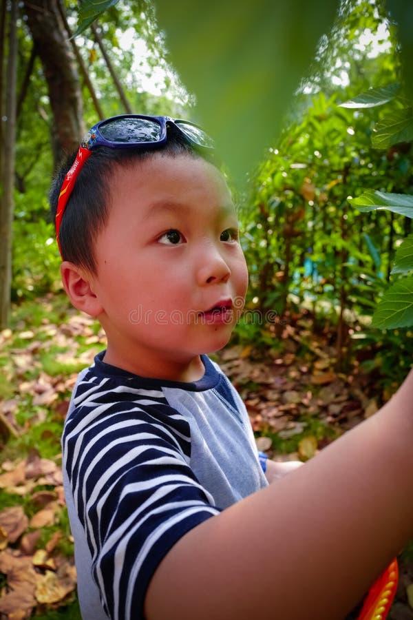 Baies de mûre de récolte de rassemblement de petit garçon photographie stock libre de droits