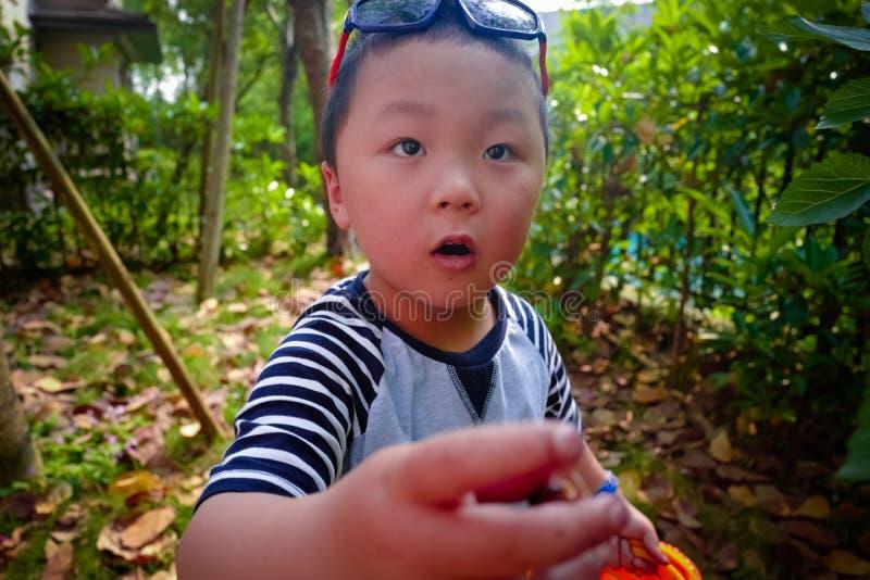 Baies de mûre de récolte de rassemblement de petit garçon photo stock
