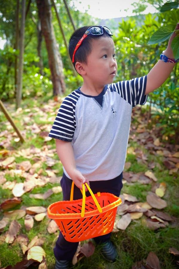 Baies de mûre de récolte de rassemblement de petit garçon photos stock