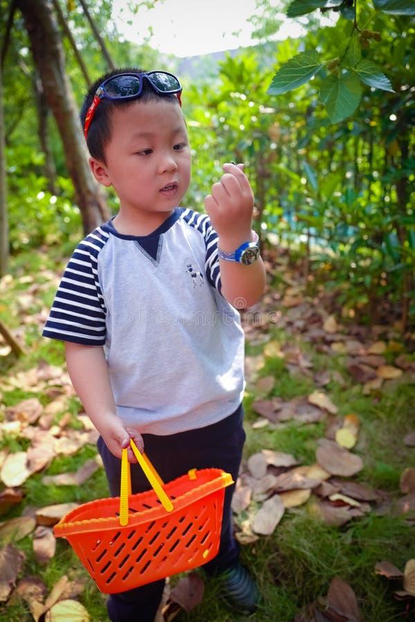 Baies de mûre de récolte de rassemblement de petit garçon images stock
