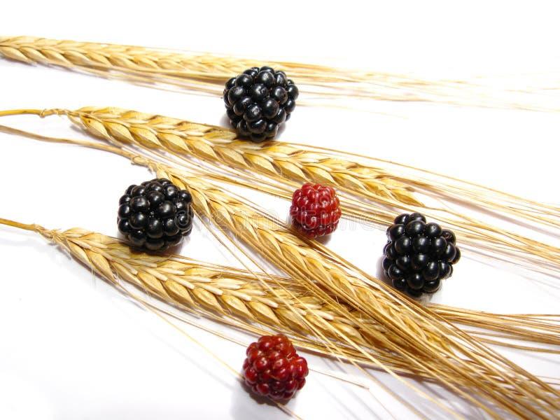 Baies et blé photographie stock libre de droits