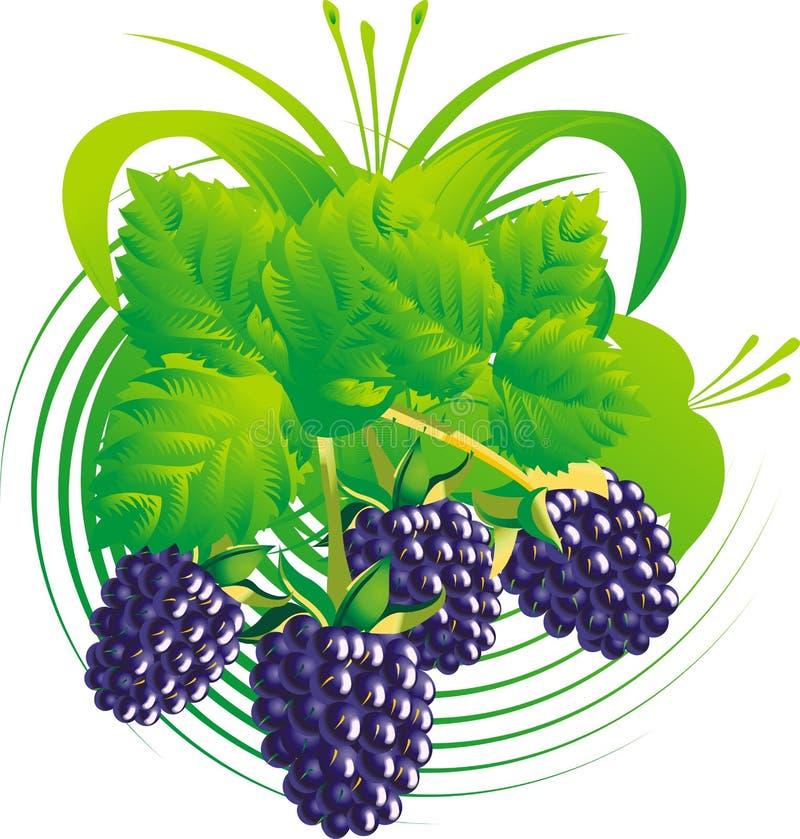 Download Baies et lames de mûre illustration de vecteur. Illustration du nature - 8660514
