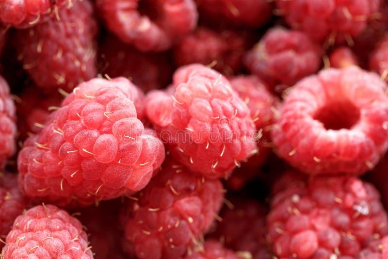 Baies fraîches de framboise rose, seulement plumées photographie stock