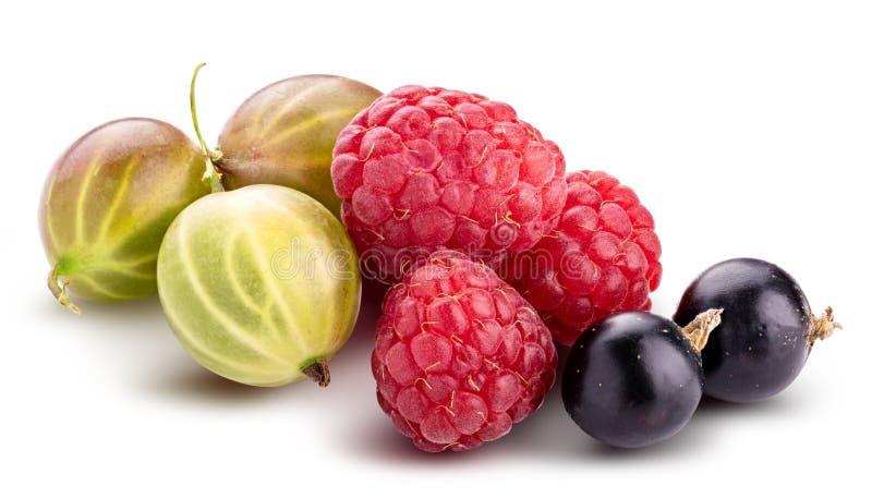 Baies ( ; framboise, cassis, mûre, gooseberry) ; isolat photos stock