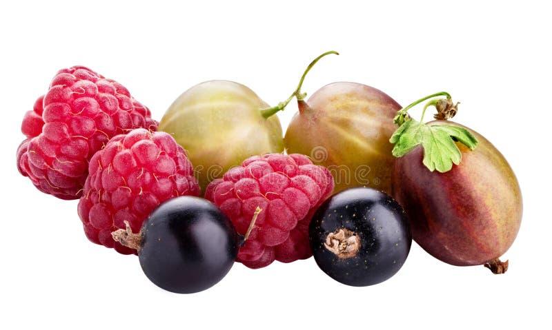 Baies ( ; framboise, cassis, mûre, gooseberry) ; isolat image libre de droits