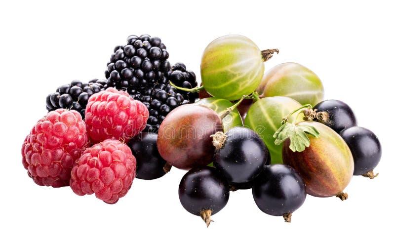Baies ( ; framboise, cassis, mûre, gooseberry) ; isolat photo stock