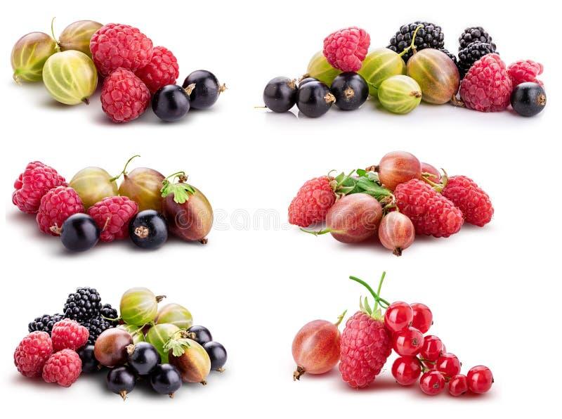 Baies ( ; framboise, cassis, mûre, gooseberry) ; isolat photos libres de droits