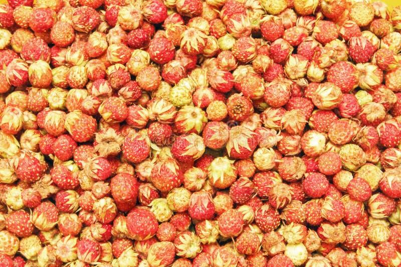 Baies mûres fraîchement sélectionnées Beau fond de fraisier commun Vue supérieure photos stock