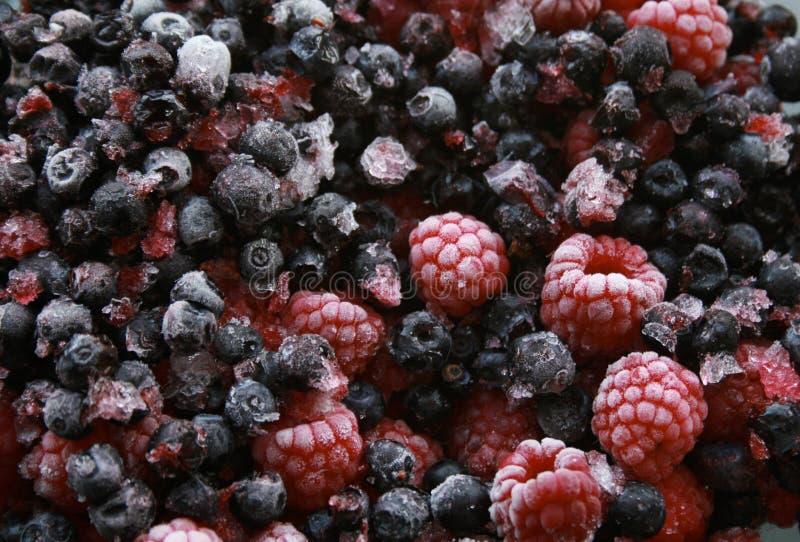 Download Baies sauvages de forêt image stock. Image du régime, nourriture - 8671165