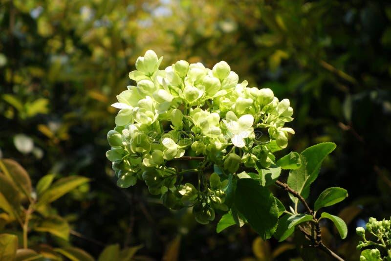 Baigner au soleil des fleurs du ` s photo stock