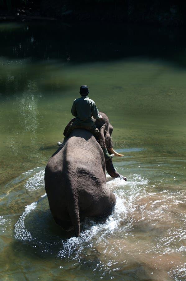 Baigner l'éléphant photographie stock