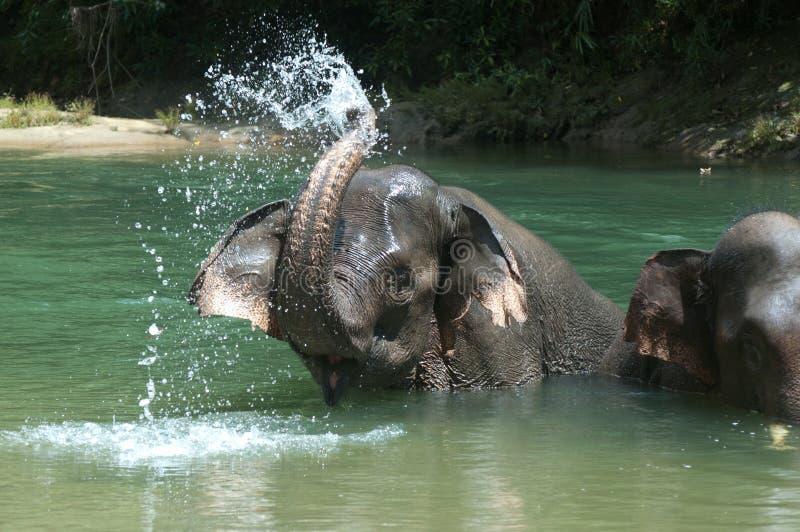 Baigner l'éléphant photo libre de droits