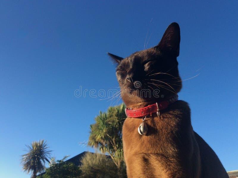 Baigner le chat photos stock