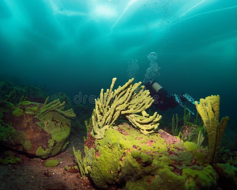 Baikal ice diving royalty free stock photos