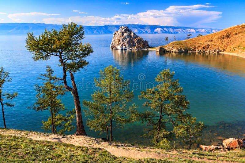 baikal lake field treen arkivbild