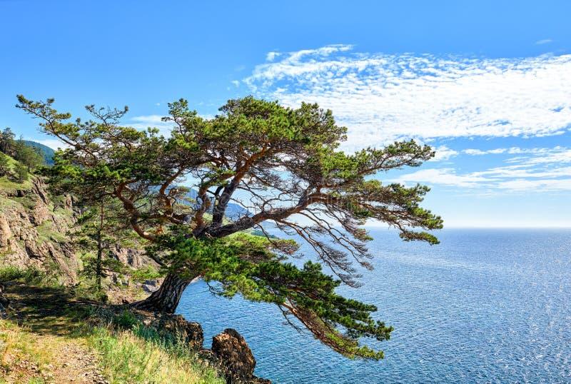 baikal lake Sörja på den stora vandringsledet royaltyfria foton