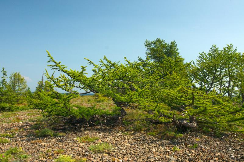 Baikal landscape with green spring forest. Russia. Siberia royalty free stock images
