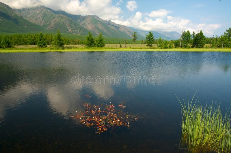 Baikal landscape with green spring forest. Russia. Siberia stock image