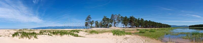 Baikal a orillas del lago con la arena blanca y los pinos imperecederos imagenes de archivo