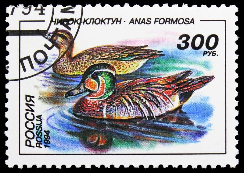 Baikal Teal (Anas formosa), Ducks serie, circa 1994 stock photo