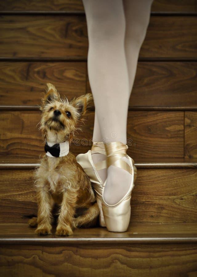 Bailarina e cão fotografia de stock