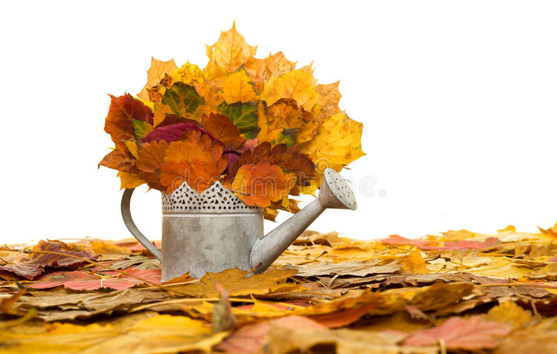 Bailer with autumn leaves on white royalty free stock photo