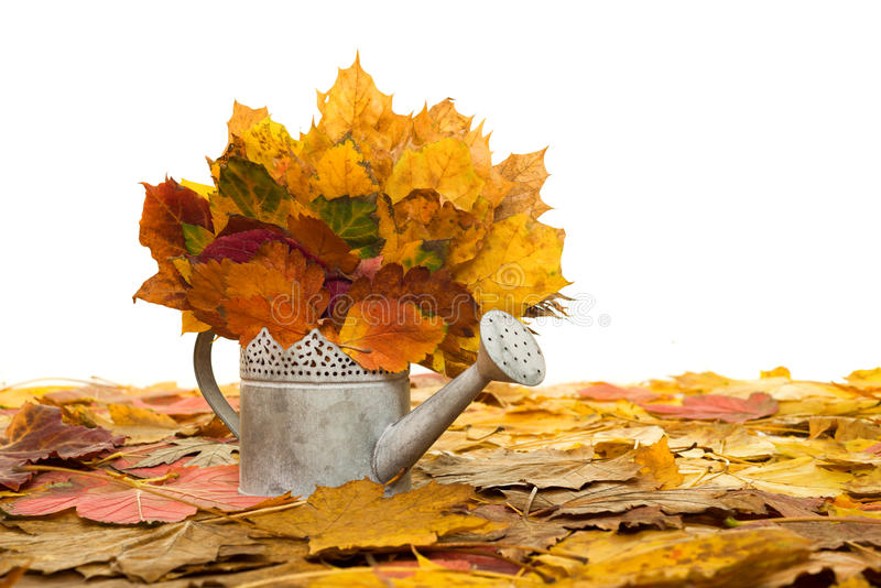 Bailer with autumn leaves on white royalty free stock photos