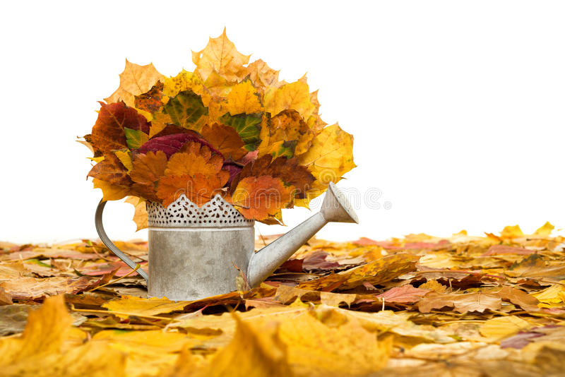 Bailer with autumn leaves on white. Bailer with autumn leaves isolated on white stock photos