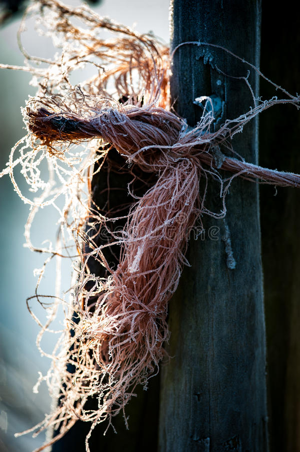 Bailer twine with ice. Bailer twine used to tie up a gate lit by early morning sun with frost royalty free stock photos