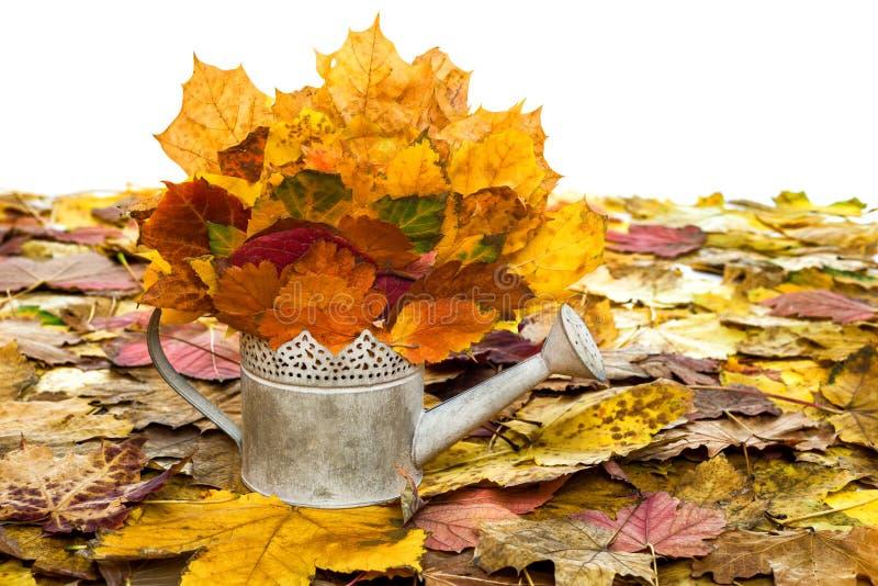 Bailer z jesień liśćmi na bielu fotografia royalty free