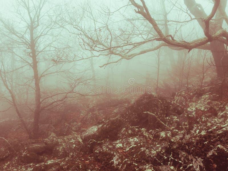 Bailey mgła zdjęcie stock