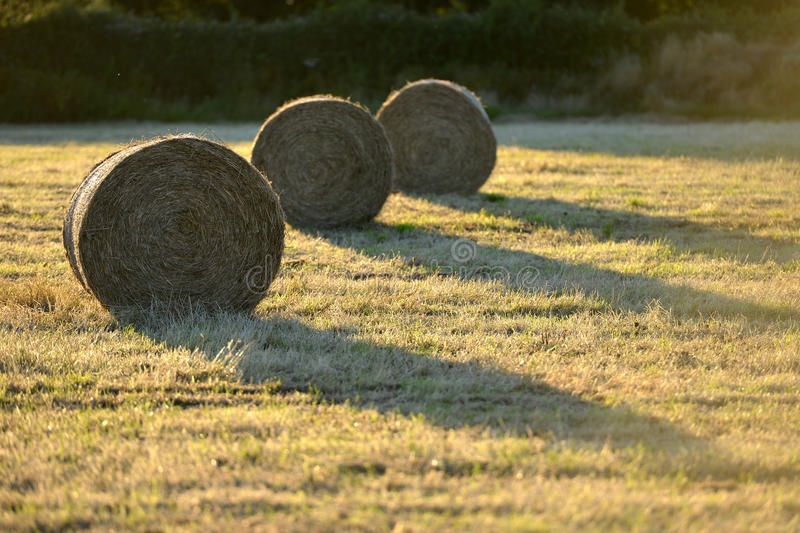 Bails. Fresh hay bails in summer golden light stock photography