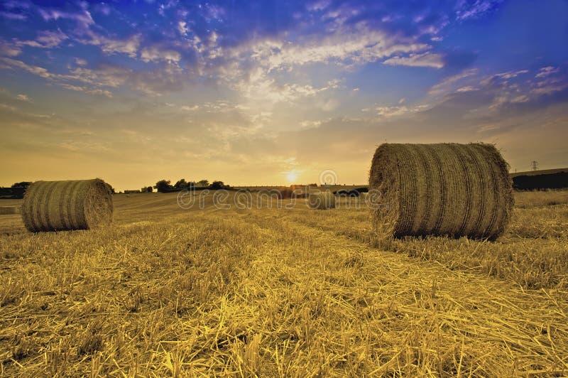 Download Bails of Golden Hay stock photo. Image of landscape, gold - 9081422