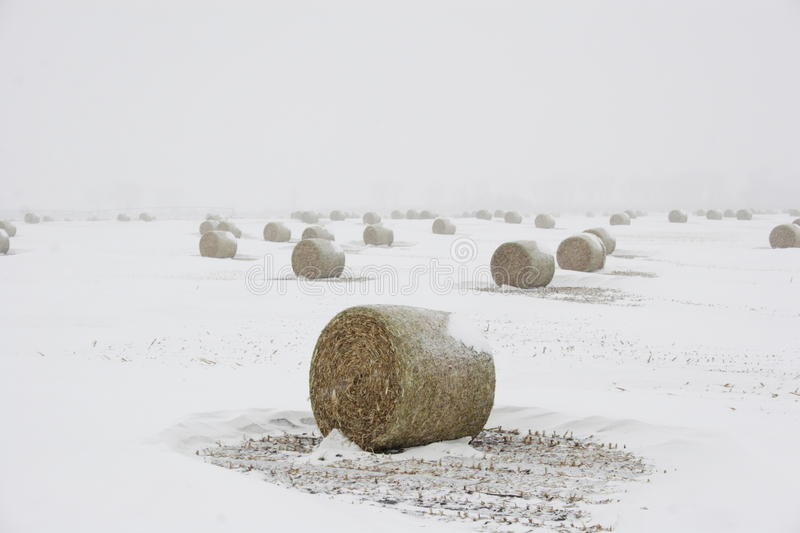 Bails of hay in blizzard royalty free stock image