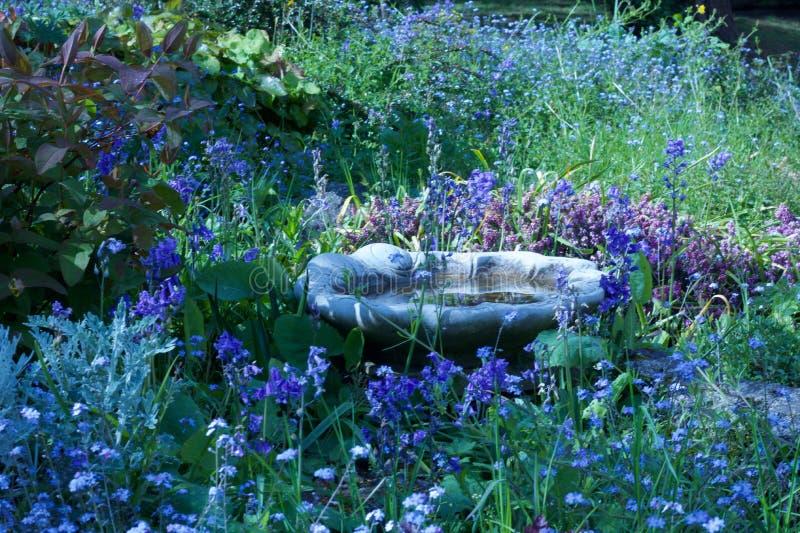 Bain d'oiseau dans le jardin rempli belle par fleur - image images libres de droits