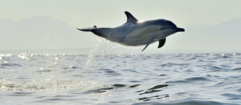 Bain de dauphin et sauter de l'eau photos libres de droits