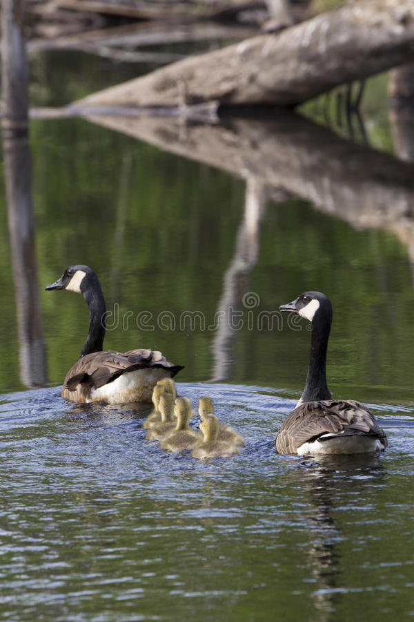 Bain de famille photos stock