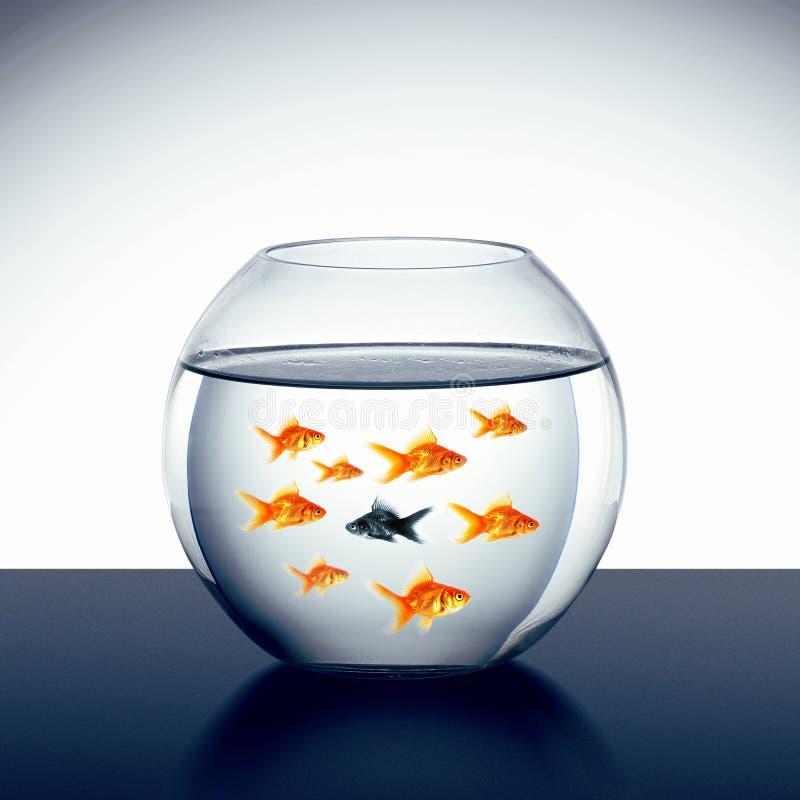 Bain de poisson rouge photographie stock libre de droits