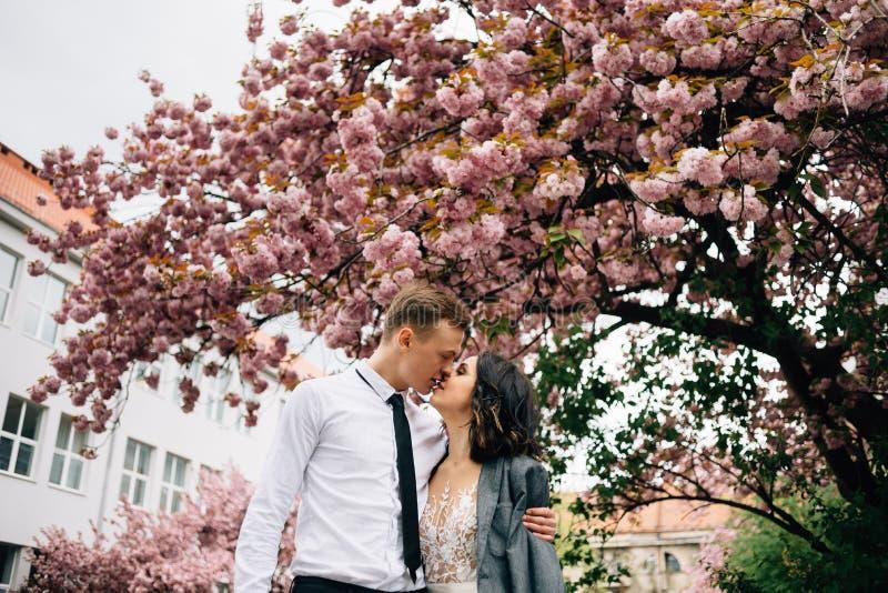 Baiser élégant de jeunes mariés de couples près d'un arbre fleurissant photographie stock